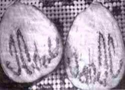 Allahin nimi munakoisossa
